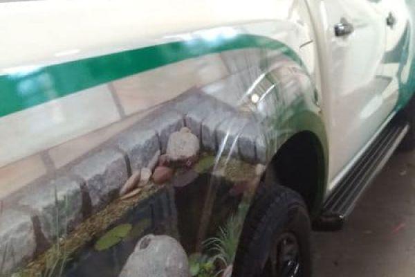 pickup-vollfolierung-rechts-hinten-280741ABB-BDE3-3654-7870-97A996E7C121.jpg